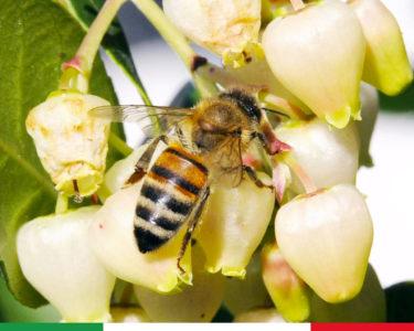 Tumore, la scoperta: questa qualità di miele italiano distrugge le cellule cancerogene